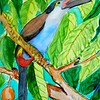 1-Black-billed-Mountain-Toucan, 8 25x12, watercolor, nov 6, 2015 DSCN9006A