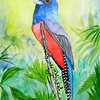 1-Blue-crowned Trogon, Brazil  8 5x12  watercolor & mixed media, nov 13, 2015 DSCN9059A
