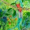 1-Resplendent Quetzel, Panama,11x15, watercolor, nov 6, 2015 DSCN9000A