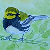 1-Black-throated Green Warbler  4x6, watercolor, nov 17, 2015 DSCN9088