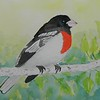 1-Rose-breasted Grosbeak, 6x 8 5, watercolor, nov 19, 2015 DSCN9100A
