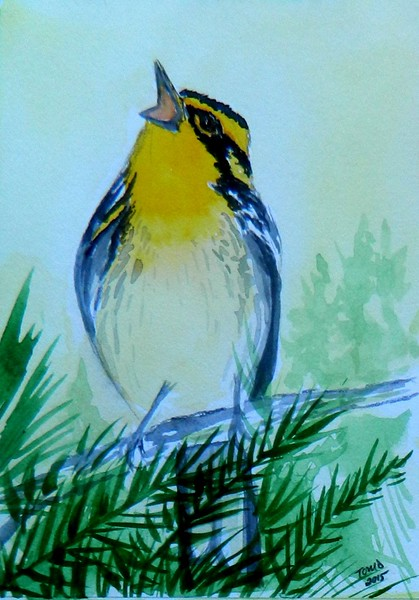 1-Blackburnian Warbler  4x6, watercolor, nov 17, 2015 DSCN9088