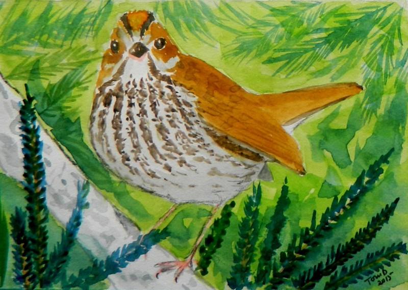Ovenbird, 4x6, watercolor, nov 21, 2015 DSCN9115