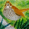 Ovenbird, 4x6, watercolor, nov 21, 2015 DSCN9115