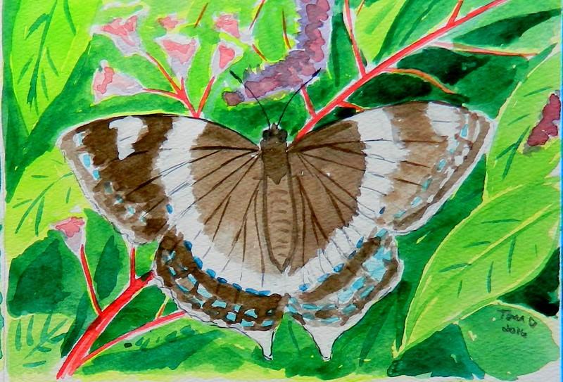 1-White Admiral, 4 5x6, watercolor, march 16, 2016 DSCN0171