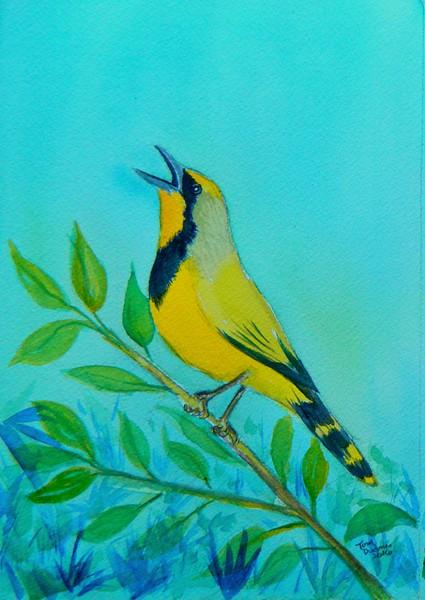 Bokmakierie, 5x7, watercolor, june 14, 2016 DSCN9982A