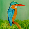 Malachite Kingfisher, 5x7, watercolor, june 15, 2016 DSCN9994-1