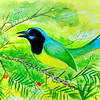Green Jay, South Texas, 9x12, watercolor, aug 10, 2016 DSCN0277-A
