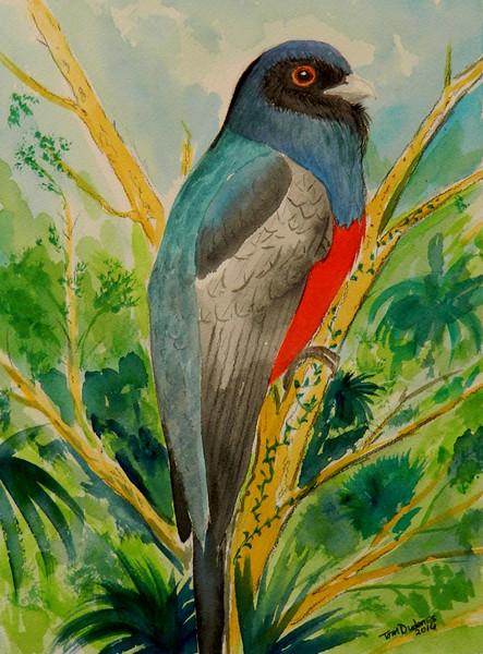 SurrucuraTrogon - Brazil, 9x12,  watercolor & pencil, aug 7, 2016 DSCN0267-A