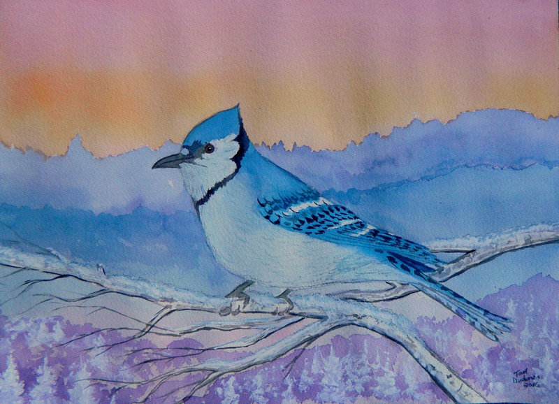 1-Blue Jay #1, 10x14, watercolor, may 25, 2016 DSCN9873