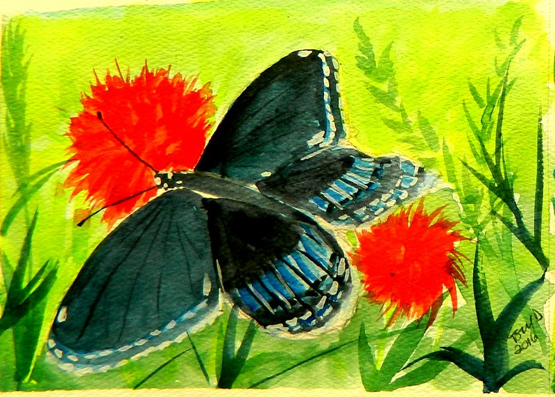 1-Red-spotted Puple, 4 5x6, watercolor, march 19, 2015 DSCN0204