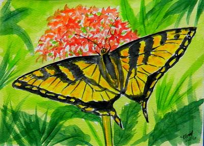 2 Tiger Swallowtail, 4 5x6, watercolor, march 14, 2016 DSCN0168