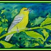 Blue-winged warbler, 8x5.5, watercolor & ink, feb 21, 2018.