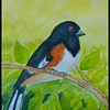 Eastern Towhee, 6x9, watercolor, jan 15, 2018.