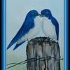 Tree Swallows, 5.75x9, watercolor, feb 19, 2018.
