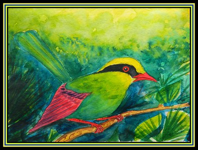 Green Magpie - Thailand, 9x12, watercolor, feb 12, 2018.