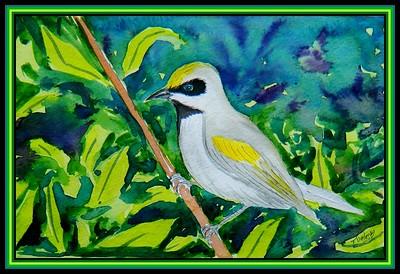 Golden-winged Warbler, 8x5.5, watercolor & ink, feb 21, 2018.