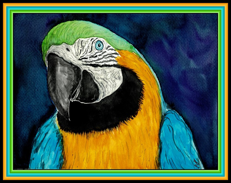 Blue & Gold Macaw, 9x11.5, watercolor & ink, feb 22, 2018.