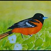 Baltimore Oriole. 6x9, watercolor, jan 15, 2018.