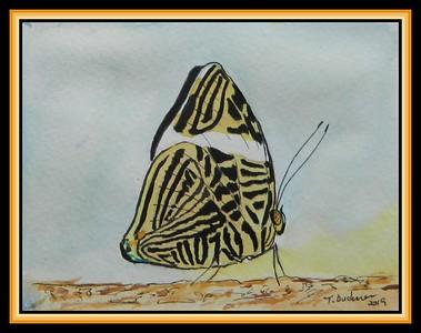 Small Beauty, Colobura dirce dirce - Panama.4.5x6, watercolor, acrylic & ink, jan 16, 2019.DSCN9779A