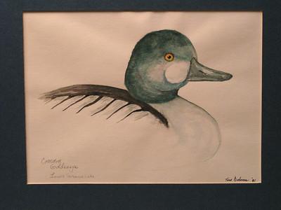 Common Goldeneye, 1981, watercolor, 7 5x5 5