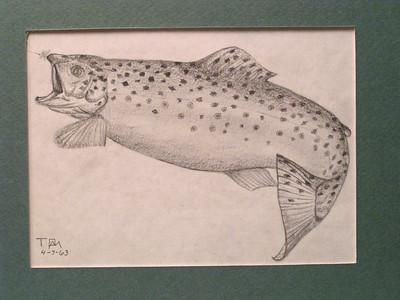 Brown Trout, apr 7, 1963, pencil, 7x5