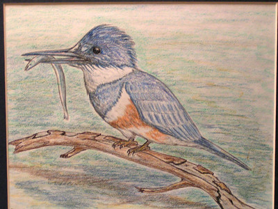 Belted Kingfisher, oct 1993, color pencil, 9 5x7 5