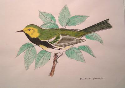 Black-throated Green Warbler, 1981, mixed media, 9 5x6 75