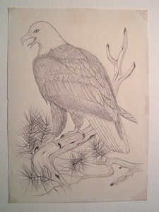 Bald Eagle, 1980, pen, 8 5x11