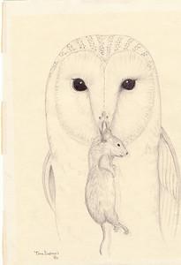 Barn Owl,1980, ink, 8x10 5