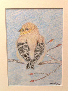 American Goldfinch, oct 1993, color pencil, 4 5x6 5