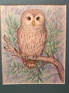 Barred Owl, 1993, color pencil, 8x10