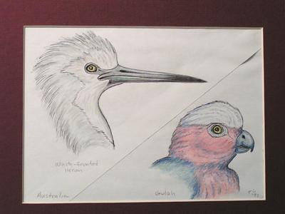 Australian Birds, 1993, color pencil, @ 7x5