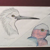 Australian Birds, 1993, color pencil, @ 7x5