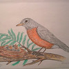 American Robin & Nest, oct 1993, color pencil, 11x8 5
