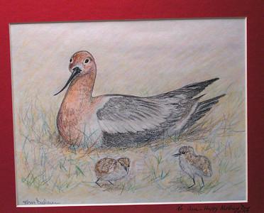 American Avocets, oct 1993, color pencil, 9 5x7 5