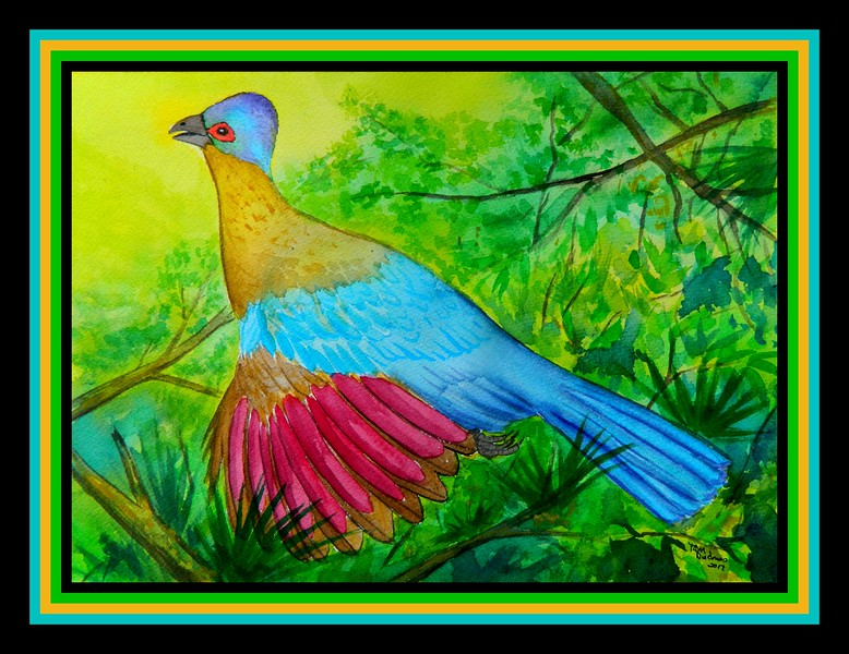 1-Purple-crested Turacao, 14x10, watercolor, june 1, 2017 DSCN00441