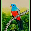 1-Black-tailed Trogon, Ecuador, 9x12, watercolor, sep 9, 2017 DSCN99291