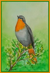 26.Cape Robin-chat, 6x9, watercolor, feb 23, 2017.