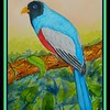 176 - Blue-tailed Trogon - male, Ecuador. 9x12, watercolor, dec 20, 2017.DSCN01821.jpg