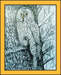28.Great Gray Owl, 14x17, graphite & color pencil, feb 27, 2017