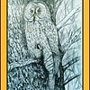 1-Great Gray Owl, 14x17, graphite & color pencil, feb 27, 2017DSCN991011A