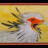 1-Secretary Bird, 11x15, watercolor, april 23, 2017DSCN99461a