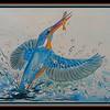 1-European Kingfisher, 9x12, watercolor, sep 17, 2017DSCN9954