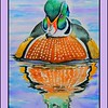 1-Wood Duck, 11x15, watercolor, jan 14, 2017 DSCN9814-11
