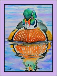 6.Wood Duck, 11x15, watercolor, jan 14, 2017.