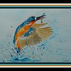 69.	Malachite Kingfisher, 9x12, watercolor, may 30, 2017.
