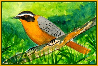27.White-browed Robin-chat, 6x9, watercolor, feb 23, 2017.