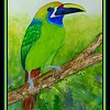 119.Emerald Toucanet, 9x12, watercolor, sep 2, 2017.