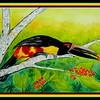 1-Stripe-billed Aracari-Colombia, 12x16, watercolor, sep 13, 2017 DSCN9937-11